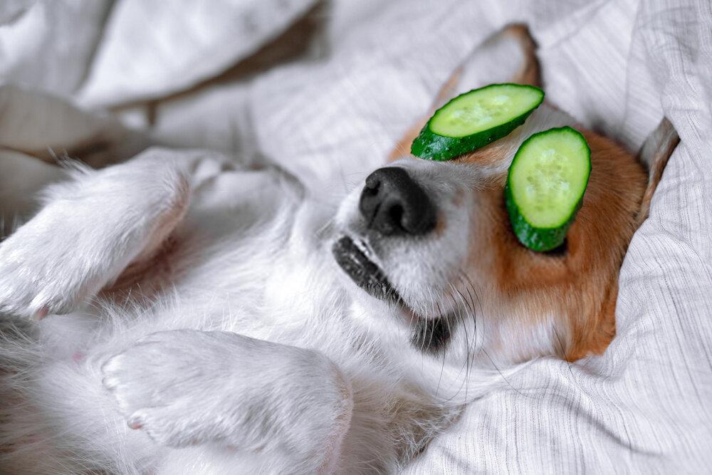 Comment nettoyer les yeux d'un chien ou d'un chat ? Guide meilleurs nettoyants !